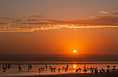 'Seagulls rest on the beach at sunset; Cannon Beach, Oregon, United States of America'