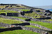 'Dry stone walls surround green fields on the Island of Inis Oirr, the smallest of the Aran Islands; Aran Islands, Ireland'