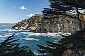 'Waves breaking against cliffs bordering Cypress Cove with Monterey Cypress trees in foreground, Point Lobos State Reserve; Carmel, California, United States of America'