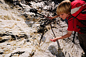 Kid is drinking water from a waterfall at the Pflerscher Höhenweg, Pflerschtal, South Tirol, Italy