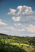 view of a vivid yellow rape field near Lorch monastry, Swabian Alp, Baden-Wuerttemberg, Germany