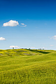 Hügellandschaft, bei San Quirico d`Orcia, Val d`Orcia, Provinz Siena, Toskana, Italien, UNESCO Welterbe