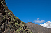 Cactus on rocks with snowy mountain top, Setima Fatma, Ourika valley, High Atlas, Morocco
