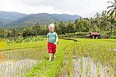 Hiking in the rice field, paddies, German young boy, 3 years old, mountains, palm trees, family travel in Asia, parental leave, German, European, MR, Munduk, Bali, Indonesia