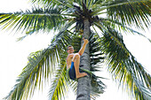 Man climbing on coconut tree, tourist, palm, thumbs up, family travel in Asia, parental leave, German, European, MR, Gili Air, Gili Inseln, Lombok, Indonesia