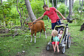 Family on holiday, father with his two kids, stroller, brown cow, calf, coconut trees, coconut grove, tropical island, girl 5 months, boy 3 years old, family travel in Asia, parental leave, German, European, MR, Gili Air, Gili Inseln, Lombok, Indonesia