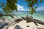 Driftwood on a tropical beach with expedition cruise ship MS Hanseatic (Hapag-Lloyd Cruises) in the distance, Onua island, Makira Province, Solomon Islands, South Pacific
