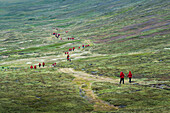 Passengers of expedition cruise ship MS Hanseatic (Hapag-Lloyd Cruises) wearing red jackets on a green hillside, Carcass Island, Falkland Islands, British Overseas Territory, South America