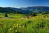 View over alpine meadow to Kaiser Mountain Range, Spitzstein, Chiemgau Alps, Tyrol, Austria