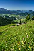 Bench in flower meadow, Inn valley in background, Kranzhorn, Chiemgau Alps, Tyrol, Austria