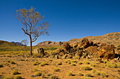 Tree and red rocks on an Outback plateau with hills in the background, East MacDonnell Ranges National Park, Northern Territory, Australia