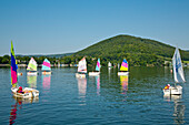Colourful sails of sailing boats of a sailing school on Lake Edersee in Kellerwald-Edersee National Park, Lake Edersee, Hesse, Germany, Europe