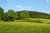Meadows in Lengeltal valley in Kellerwald-Edersee National Park, Frankenau, Hesse, Germany, Europe