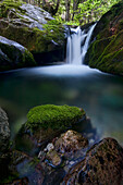 Waterfall in the forest in the Pesio Valley