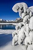 Heavy snow on the landscape of an alpine lake, Valmalenco, Valtellina, Lombardy