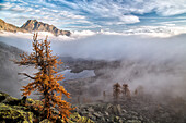 A classic condition of a threatening storm in the mountain. A solitary larch is trying to protect itself from wetness and rain washing its little colorful needles away, Mont Avic natural park, Aosta valley, Italy.