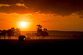 The warm colors of Africa with the profile of one of the most characteristic animals of this country, Masai