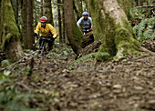 Two mountain bikers dressed in colorful clothing riding the Discovery Trail outside of Port Angeles, Washington.