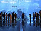 Biggest aquarium in the world at the Dubai Aquarium and Discovery Center.