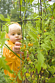 Preschooler reaching out with hand to harvest tomatoes in a garden in the rain, Celo, North Carolina.