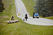 A man and his daughter with horses and dogs moving a group of sheep next to a road while a blue truck passes by in Uruguay.