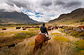 The last remaining Goucho and his family herd the sheep and cattle that feed the staff at the Estancia Chacabuco, this estancia, previously one of the largest in Chilean Patagonia is now becoming the new Patagonia National Park. The process of creating th