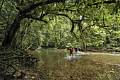 Three British explorers wade through a river deep in the jungles of Borneo, Malaysia, on their way to a huge cave entrance to explore for the first time.
