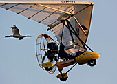 A Whooping Crane flies behind an Ultralight operated by Operation Migration in the Necedah National Wildlife Refuge in Necedah, Wisconsin in September 2009. The ultralight will lead them to Florida during the fall migration.