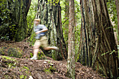Young man trail running in Big Basin State Park, California.