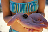 A tiny hermit crab enjoys a rare lofty view of the Caribbean ocean from the hands of a young woman on the beach. jdd_mr1111