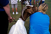 A young woman gets a kiss from a friendly Boer goat at the Millington International Goat Days Family Festival, Millington Tennessee.