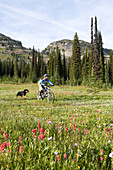 Sol Mountain, BC - Kate Watters mountain bikes across alpine meadow with her dog, Babushka while flowers in bloom at Sol Mountain Touring's backcountry lodge in the Southern Monashee range of the Columbia Mountains of South Central British Columbia.