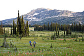 Sol Mountain, BC - Kate Watters and Eli Watson mountain bike across alpine meadow while flowers in bloom at Sol Mountain Touring's backcountry lodge in the Southern Monashee range of the Columbia Mountains of South Central British Columbia.