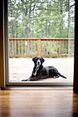 A six year old labrador retriever mix dog waits outside of a home in East Quogue, New York in the Hamptons on July 4, 2007. releasecode: rd_pr0004