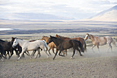 A herd of horses running on an estancia on March 2, 2008 near Las Torres National Park, Chile.