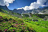 Alpine roses with granite-mountains in background, Val Codera, Sentiero Roma, Bergell range, Lombardy, Italy