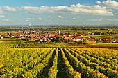 Vineyard landscape and Maikammer village, German Wine Route, Rhineland-Palatinate, Germany, Europe