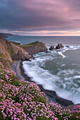 Thrift flowering on the cliff tops above Hartland Quay at sunset, North Devon, England, United Kingdom, Europe