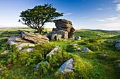 Summer at Saddle Tor in Dartmoor National Park, Devon, England, United Kingdom, Europe