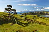 Coastline looking north towards Coromandel and Hauraki Gulf, Coromandel Peninsula, Waikato, North Island, New Zealand, Pacific