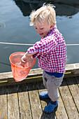 Boy (4 years) holding a jellyfish in a dip net, Guldborg, Falster, Denmark