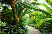 Palm trees in the Botanical Garden, Munich, Upper Bavaria, Bavaria, Germany