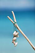 Seashells tied to stick, close-up