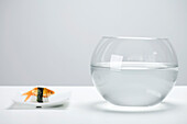 Goldfish prepared as nigiri sushi and empty fishbowl