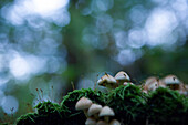 Mushrooms and other vegetation