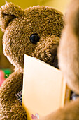 Teddy bears placed face to face with book between them, cropped
