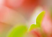 Flower and leaf, extreme close-up, defocused