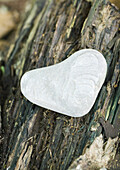 Heart shaped pebble on bark, close-up