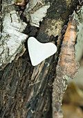 Heart shaped stone on bark