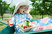 Little girl sitting in wheelbarrow eating raspberries stuck on her fingers